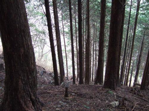 2008_0413miyanasansou0260s.JPG